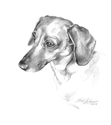 Drawing - Portrait Of A Dachshund Paying Attention by Alena Nikifarava