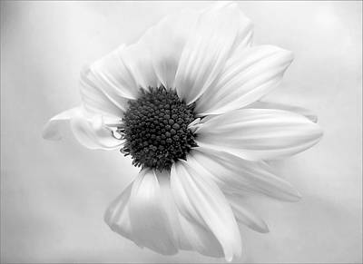 Photograph - Portrait Of A Daisy by Louise Kumpf