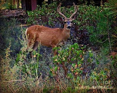 Photograph - Portrait Of A Deer by Keilla Rembert of Bobbee Rickard Photography