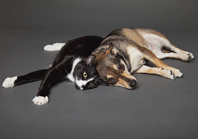 Portrait Of A Dog And Cat Laying Art Print