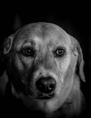 Photograph - Portrait Of A Dog by Jim DeLillo