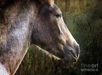 Portrait Of A Dreaming Horse Art Print by Angel Ciesniarska