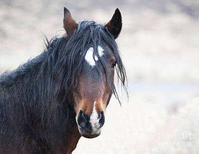 Photograph - Portrait Of A Free Stallion by Lula Adams