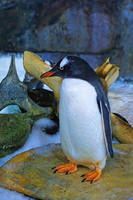 Portrait Of A Gentoo Penguin Original by Linda Phelps