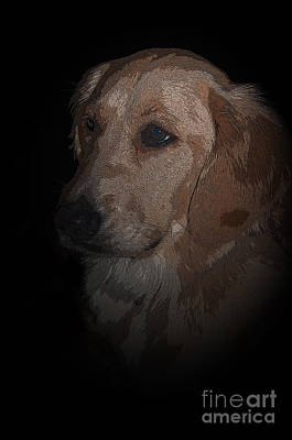 Photograph - Portrait Of A Golden by Bianca Nadeau