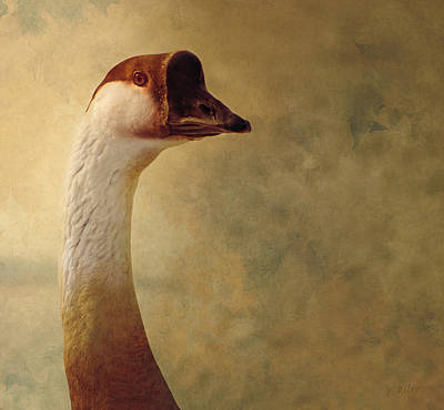 Portrait Of A Goose Art Print by Fran Riley