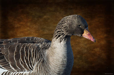 Portrait Of A Goose II Art Print by Mary Machare