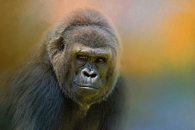 Photograph - Portrait Of A Gorilla by Jai Johnson