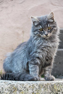 Target Threshold Photography - Portrait Of A Grey Cat Stands On A Step by John Short