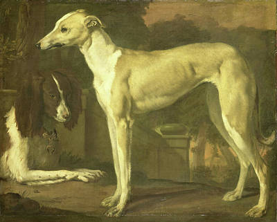 Spaniel Drawing - Portrait Of A Greyhound And Spaniel, Jan Weenix by Litz Collection