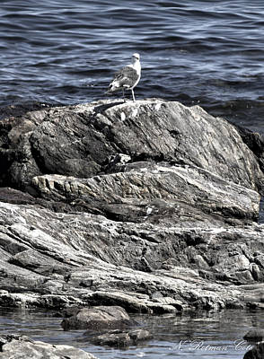 Photograph - Portrait Of A Gull by Natalie Rotman Cote
