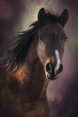 Portrait Of A Horse Art Print