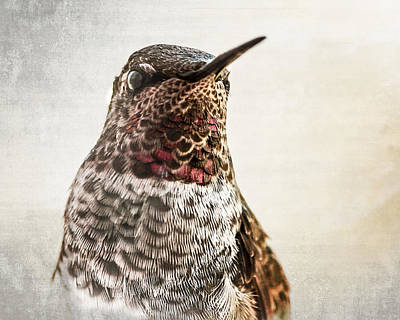 Photograph - Portrait Of A Hummer by Caitlyn  Grasso