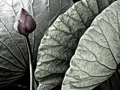 Photograph - Portrait Of A Lotus - 3 by Larry Knipfing