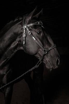 Dressage Photograph - Portrait Of A Lusitano Stallion by Jak Wonderly