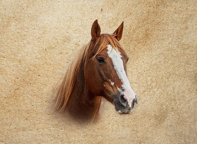 Portrait Of A Mare Print Art Print by Doug Long