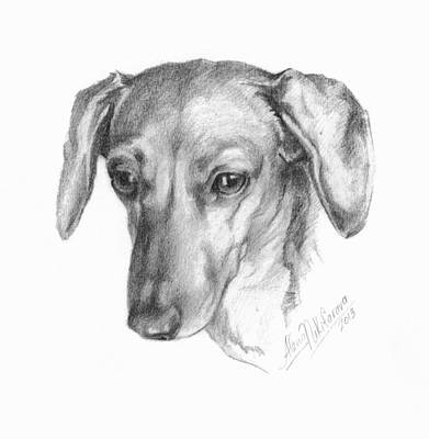 Drawing - Portrait Of A Mini Dachshund  by Alena Nikifarava