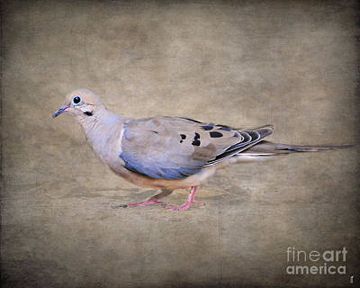 Mourning Dove Photograph - Portrait Of A Mourning Dove by Jai Johnson