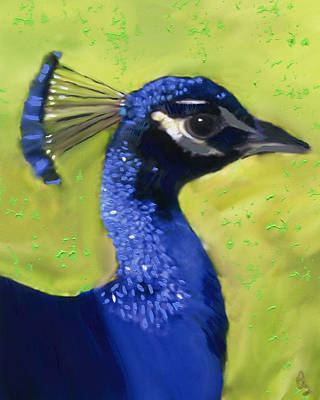 Portrait Of A Peacock Art Print