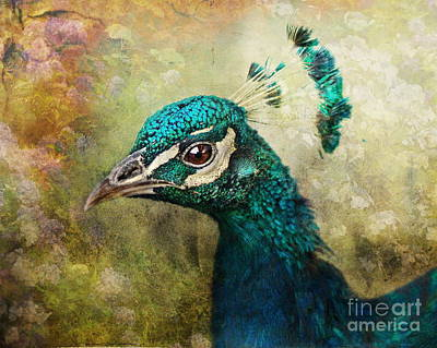 Portrait Of A Peacock Art Print by Pauline Fowler