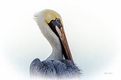 Photograph - Portrait Of A Pelican by Debra Martz