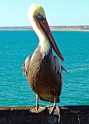 Portrait Of A Perky Pelican Art Print by Brian D Meredith