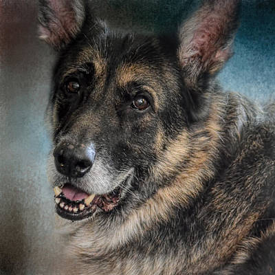Photograph - Portrait Of A Shepherd - German Shepherd by Jai Johnson