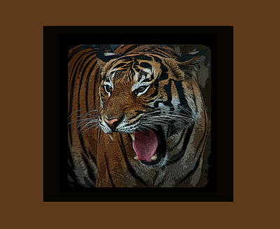 Photograph - Portrait Of A Tiger by Aimee L Maher ALM GALLERY