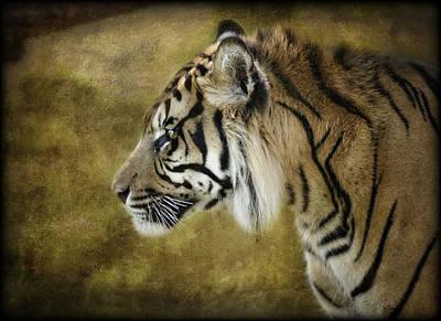 Photograph - Portrait Of A Tiger  by Saija  Lehtonen