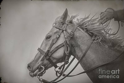 Photograph - Portrait Of A War Horse by Kim Henderson