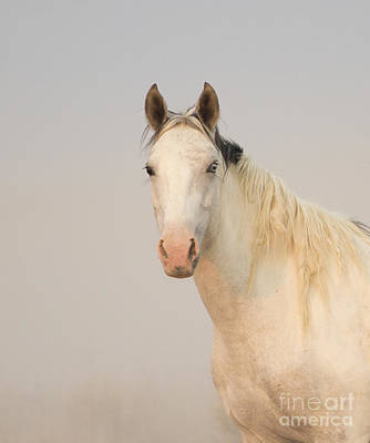 Sand Wash Basin Photograph - Portrait Of A Wild Mare by Carol Walker