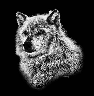 Photograph - Portrait Of A Wolf by Fran Riley