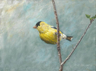 Portrait Of An American Goldfinch Print by Anton Oreshkin
