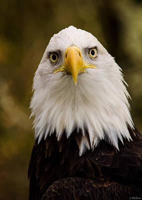 Portrait Of An Eagle Art Print by Jordan Blackstone
