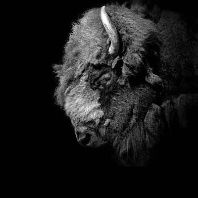 Bison Photograph - Portrait Of Buffalo In Black And White by Lukas Holas