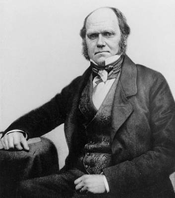 Creationism Photograph - Portrait Of Charles Darwin by English Photographer