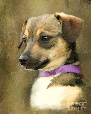 Chihuahua Digital Art - Portrait Of Maizie by Jayne Carney