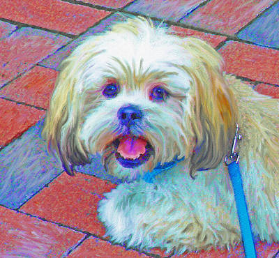 Cute Dog Digital Art - Portrait Of Shih Tzu by Jane Schnetlage