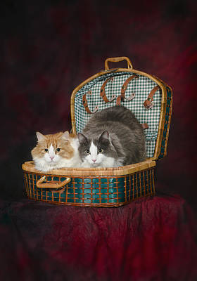 Gray Tabby Photograph - Portrait Of Two Cats In A Basketst by Corey Hochachka