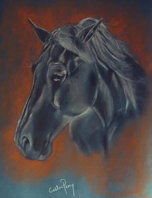 Portrait Study Of A Horse Art Print by Callan Percy