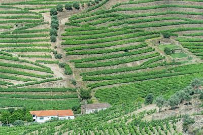Portugal, Douro Valley, Hillside Art Print