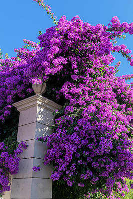 Bougainvilleas Photograph - Portugal, Pinhao, Bougainvillea (large by Jim Engelbrecht