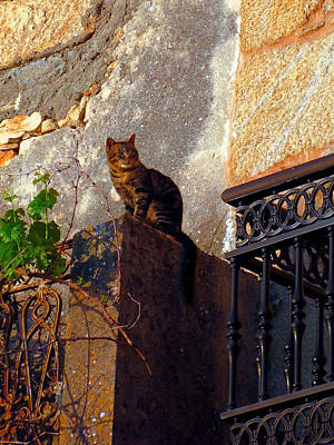 Photograph - Portuguese Tabby Enjoying The Evening Sun by Menega Sabidussi