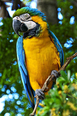Photograph - Posing Blue And Yellow Macaw by Bibi Rojas