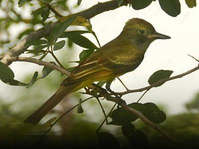 Photograph - Posing For Audubon by Grace Dillon