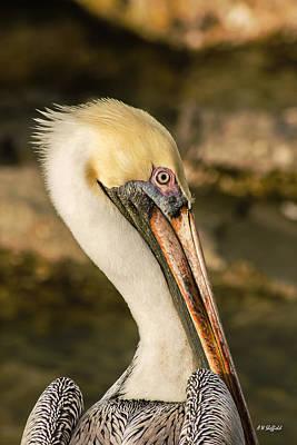Posing Pelican Art Print