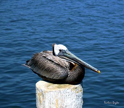Sea Bird 2 Photograph - Posing Pelican At Stearns Wharf 2 by Barbara Snyder