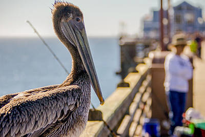 Art Print featuring the photograph Posing Pelican by Robert  Aycock