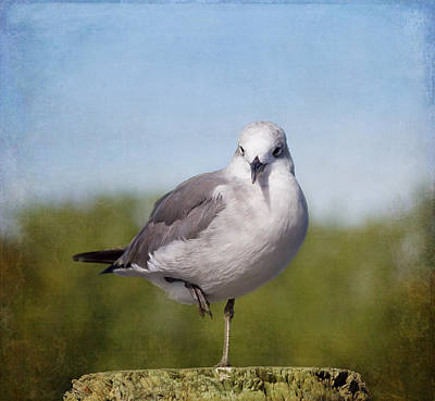 Flock Of Bird Photograph - Posing Seagull by Kim Hojnacki