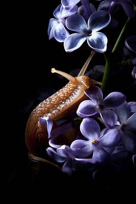 Snail Photograph - Posing by Suren Manvelyan